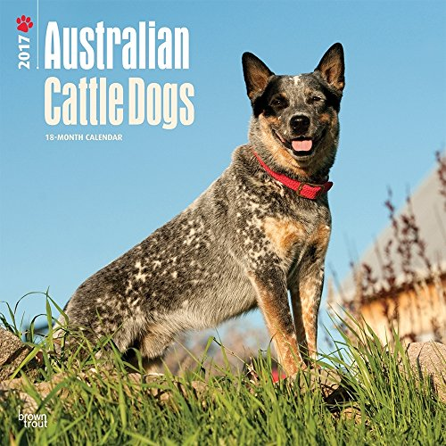 2017 Monthly Wall Calendar - Australian Cattle Dogs