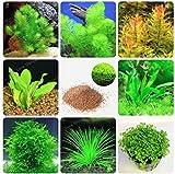 Hot Sale! 200 Pcs New Aquarium Grass Seeds (Mix) Water Aquatic Plant Seeds Family Easy Plant Seeds For Decorate The Aquarium