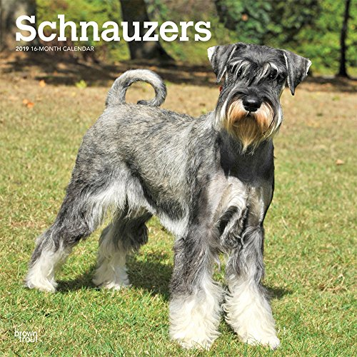 Schnauzers International Edition 2019 12 x 12 Inch Monthly Square Wall Calendar, Animals Dog Breeds (Multilingual Edition)