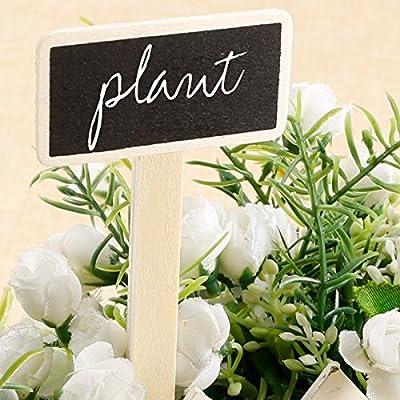 20 x grandes S Madera - Pizarra Planta Plantas Cartel ...