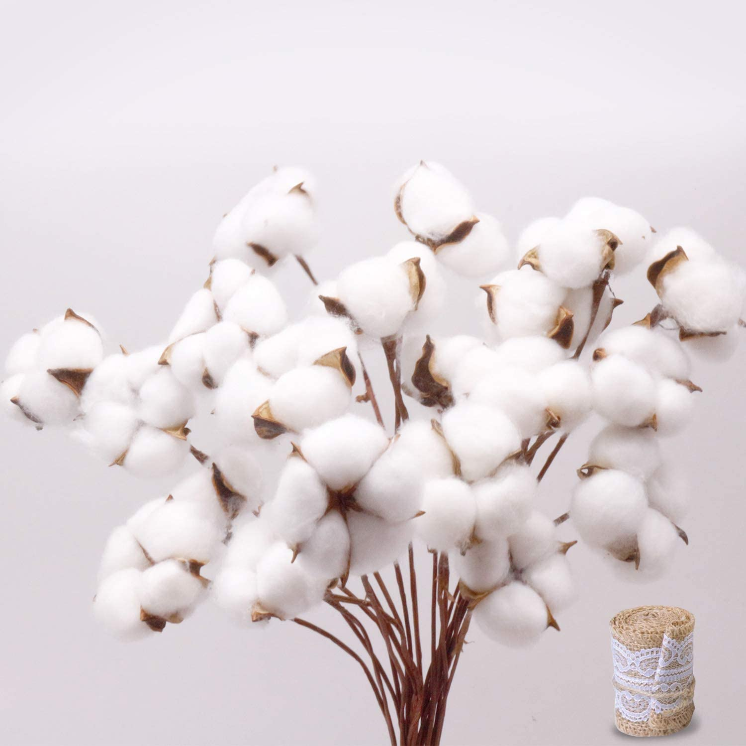White 20 Pack Natural White Cotton Stems Dried Flower Branch Bundle Premium Fall Arrangements with Natural Laces Burlap Craft Lace Ribbon Roll for DIY Design Christmas Decoration Corrugated Package