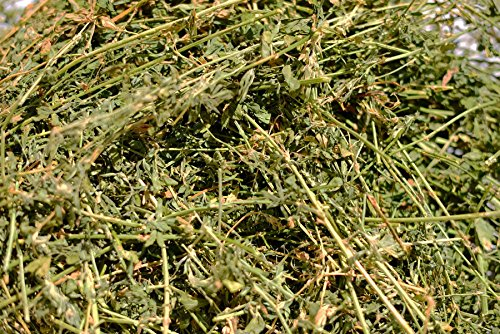 Premium Alfalfa Hay (10 lbs.)