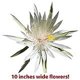 mothernaturesgardenstore.com B001YQM9N0 9GreenBox - Orchid Cactus - 2 Pack