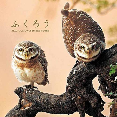 Download Beautiful Owls in the World (Japanese Edition) ebook
