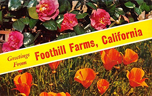 Group Of 3 Foothill Farms California Waterfront Multiview Postcards K79269 ()