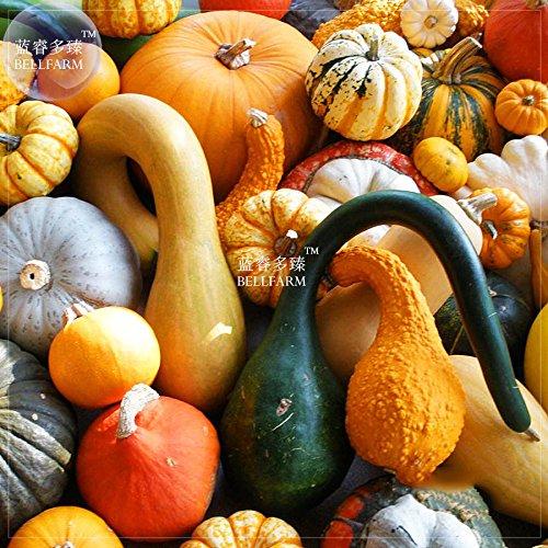 BELLFARM Mixed Gourds Ornamental PumpkinSeeds(no Soil), 10pcs, Professional Pack, Edible Cucurbita Pepo (Edible Gourds)