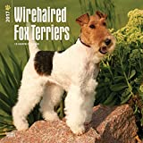 2017 Monthly Wall Calendar - Wirehaired Fox Terriers