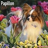 Papillon Calendar 2017