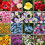 Shorty Low-Grow Wildflower Seed Mix - 5 Pounds, Bulk, Mixed