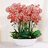 GBHNJ False Vase Pu Red Orchid Artificial Decoration