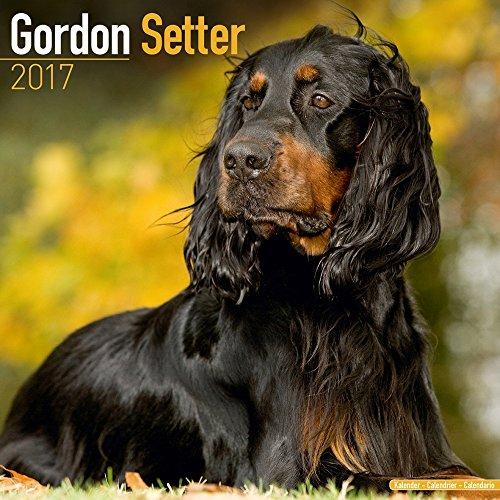 turner-photo-2017-gordon-setter-wall-calendar-17998027462