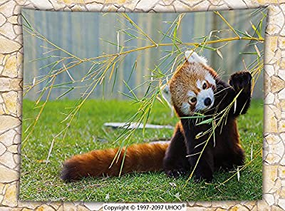 Wildlife Decor Fleece Throw Blanket Cute Red Panda on the Field Playing with Bamboo Branches Native Himalayas Throw Brown Green