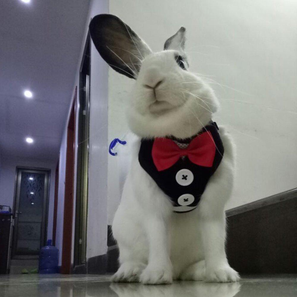 Black Layboo Soft Handsome Collar Rabbit Harness With Leash Size Medium (black)