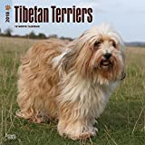 Tibetan Terriers 2018 12 x 12 Inch Monthly Square Wall Calendar, Animals Dog Breeds Terriers