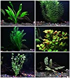 25+ stems / 6 species Live Aquarium Plants Package - Anacharis, Amazon and...