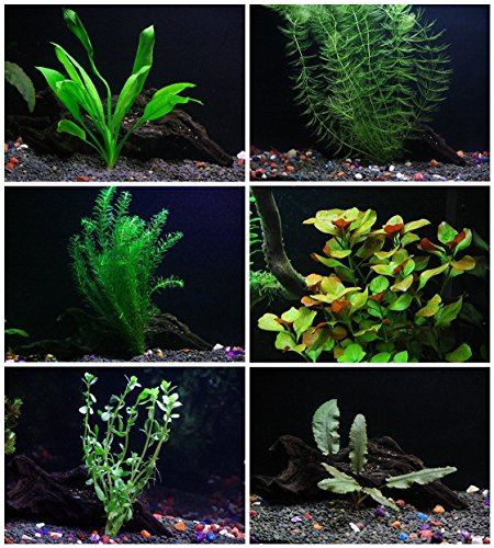 25+ stems / 6 species Live Aquarium Plants Package - Anacharis, Amazon and more! ()