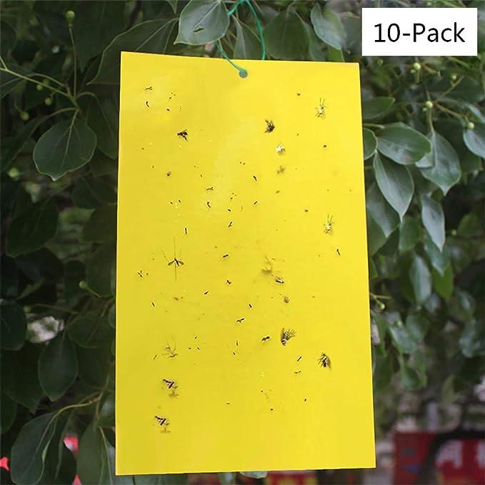 DAYOLY - Trampas Adhesivas de Doble Cara Amarillas para Insectos ...