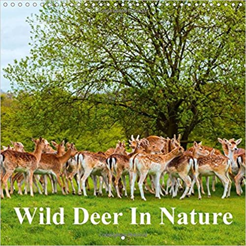 Wild Deer in Nature 2018: Wild Deer in the Forest and on a Hill (Calvendo Animals)