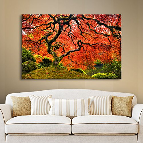 ArtWall 'Japanese Maple Tree' Gallery-Wrapped Canvas Art by John Black, 36 by 54-Inch