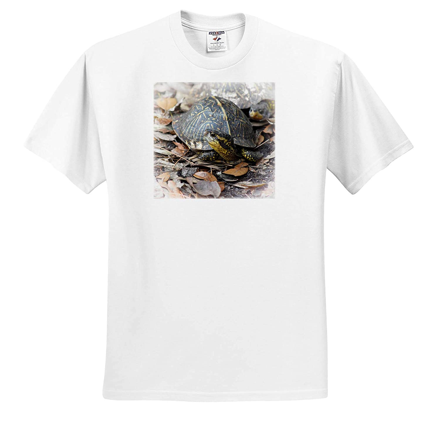Florida Box Turtle on Leaves 3dRose Susans Zoo Crew Animal T-Shirts