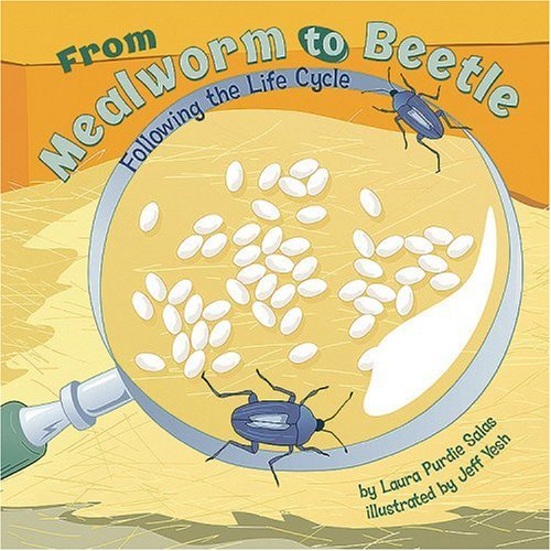 From Mealworm to Beetle: Following the Life Cycle (Amazing Science: Life (Mealworm Life Cycle)