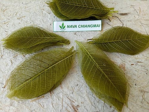 NAVA CHIANGMAI 100 Green Skeleton Leaves Rubber Tree Natural Scrapbook Craft CARD Wedding -
