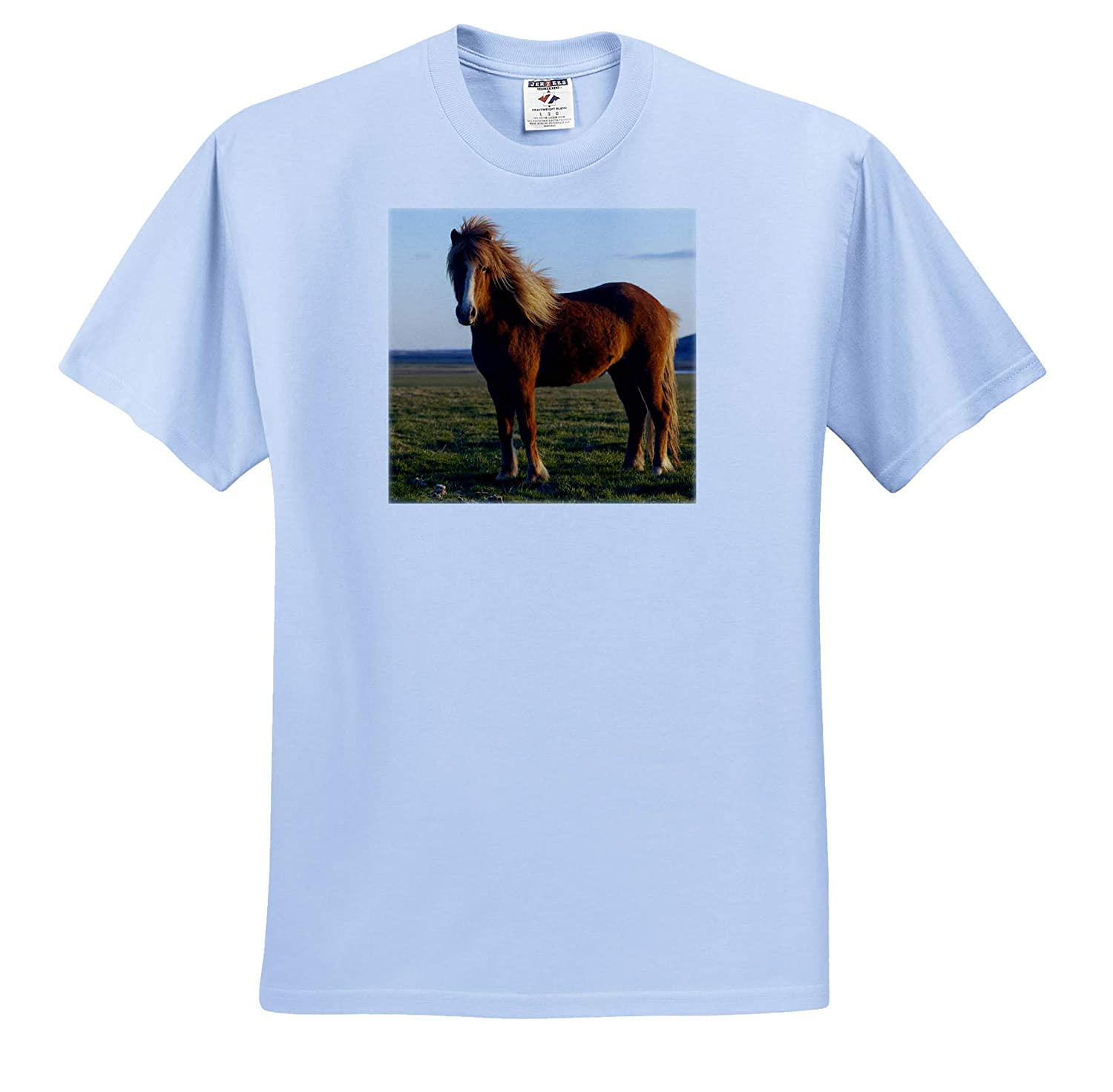 ts/_313631 Horses 3dRose Danita Delimont Icelandic Horse in Sunset Light - Adult T-Shirt XL Iceland
