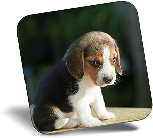 Destination Vinyl ltd Awesome Fridge Magnet - Cute Beagle Puppy Dog Baby 15527