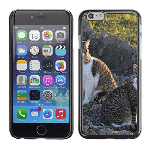 """Premio Sottile Slim Cassa Custodia Case Cover Shell // F00009016 chaton // Apple iPhone 6 6S 6G PLUS 5.5"""""""