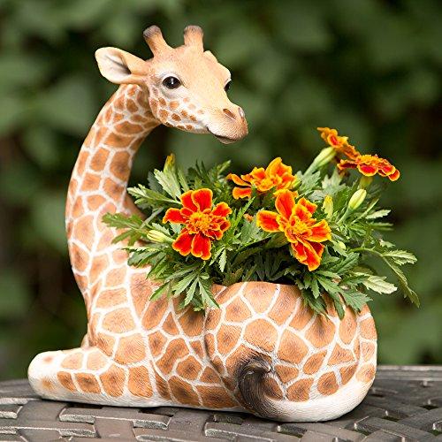 Good Gifts For Giraffe Lovers