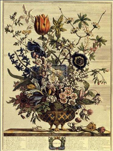 Robert Furber - Twelve Months of Flowers 1730/February (Flowers Of Twelve Months)