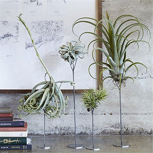 Solid Iron Planter Stand - Danmu 4pcs (4 Sizes) Solid Iron Stand Air Plant Holder Airplant Container Tabletop Planter Tillandsia Planter (Plants Not Included)