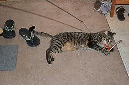 Gocat da bird rod and feather cat toys for Jackson galaxy da bird