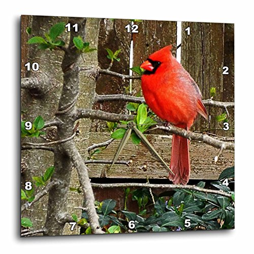 3dRose Renderly Yours Birds - Bright Red Cardinal By Wooden Fence - 15x15 Wall Clock (dpp_269401_3)
