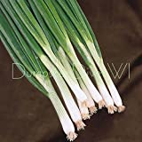 Organic Lisbon Spanish heirloom evergreen Onion bunching scallions white 50+