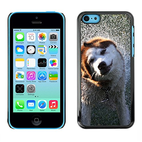 Omega Case PC Polycarbonate Cas Coque Drapeau - Apple iPhone 5C ( Cool Wet Dog )