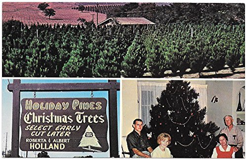 Postcard Holiday Pines Christmas Trees in Valley Center, California~96936