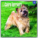 Cairn Terriers 2017 Square