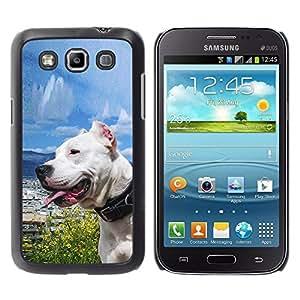 Qstar Arte & diseño plástico duro Fundas Cover Cubre Hard Case Cover para Samsung Galaxy Win / I8550 / I8552 / Grand Quattro ( Sunny Dog Sea Ocean Pit-Bull Terrier Pet)