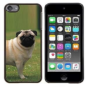 Caucho caso de Shell duro de la cubierta de accesorios de protecci¨®n BY RAYDREAMMM - Apple iPod Touch 6 6th Touch6 - Pug Fuera Hierba del perro de perrito Peque?o