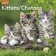 Day Dream DDMF49-2817 Kittens Mini Calendar, Bilingual, September 2016-December 2017, 7-Inch x 7-Inch