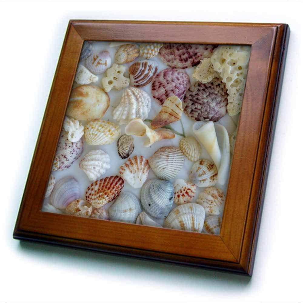 3dRose Collection of Seashells from Sanibel Island in Florida, USA - Framed Tiles (ft_331193_1)