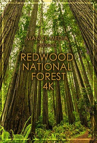 Redwood (4K UHD) - Old Redwood Growth