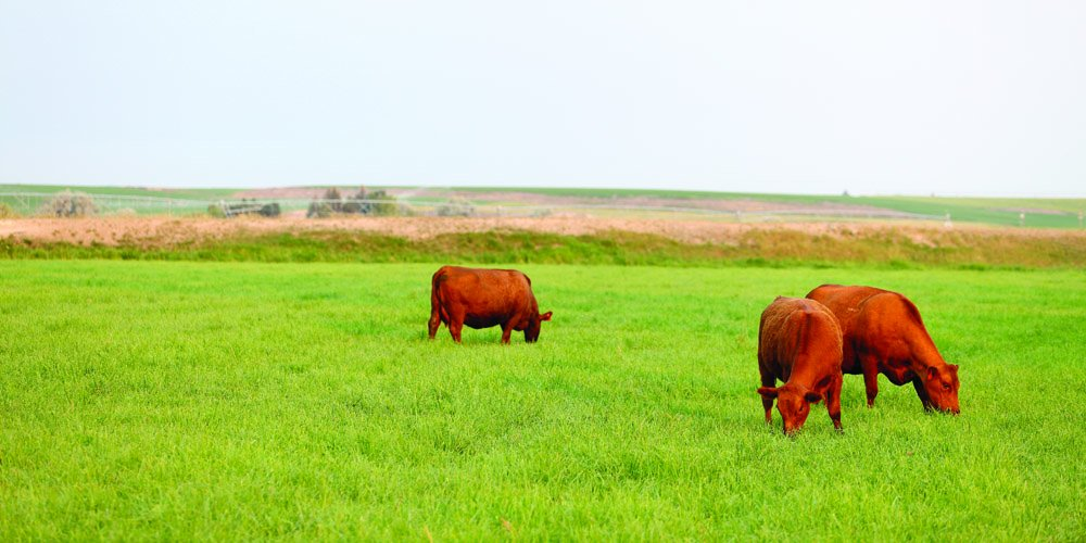 Nature's Seed PB-SABC-2.5-A 2.5 Acre South-Atlantic Transitional Beef Cattle Pasture Blend