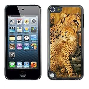 Paccase / SLIM PC / Aliminium Casa Carcasa Funda Case Cover para - Leopard Africa Cub Nature Summer Mother - Apple iPod Touch 5