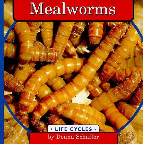 Mealworms (Life Cycles) by Donna Schaffer (Mealworm Life Cycle)