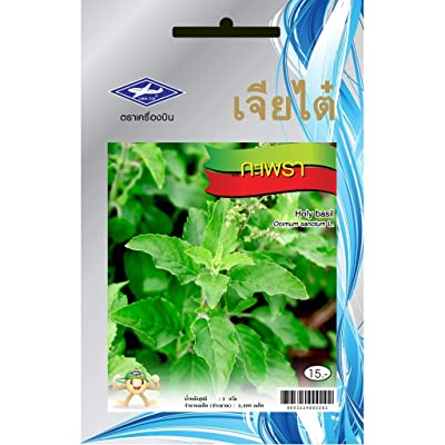 Holy Basil (2400 Seeds) Seeds - 1 Package from Chia Tai, Thailand : Garden & Outdoor