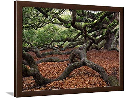 ArtEdge Historic Angel Oak Tree, Charleston, South Carolina, USA Print with Brown Frame, 27 x 21, Brown Frame-Unmatted -