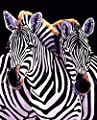 Zebra 16x20 inches - Digital Oil Painting Canvas Wall Art Artwork Landscape Paintings for Home Living Room Office White Christmas Decor Decorations Gifts