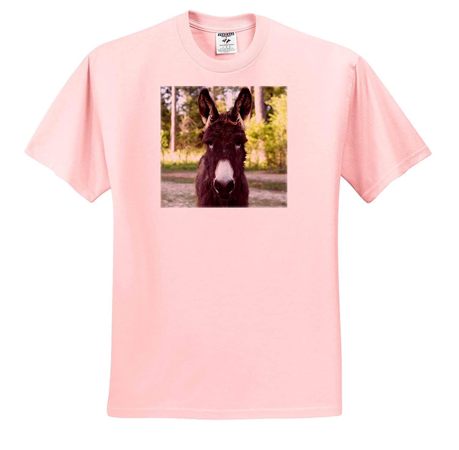 - Adult T-Shirt XL ts/_315562 3dRose Stamp City Photograph of a Fuzzy Baby Donkey on a Farm in South Carolina Animals